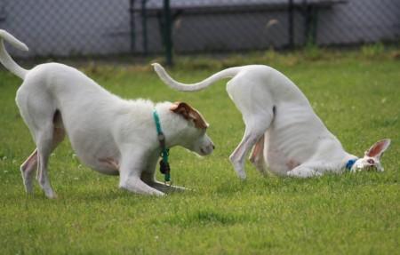 Spiel- und Laufspaß für dich & deinen Hund