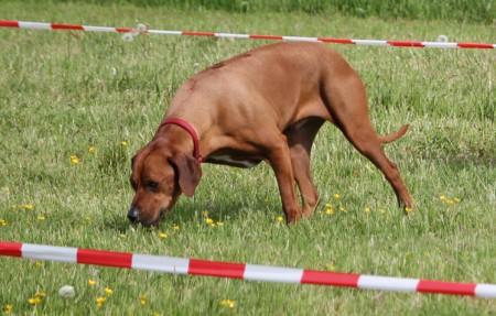 Seminar - Beschäftigung für den Familienhund