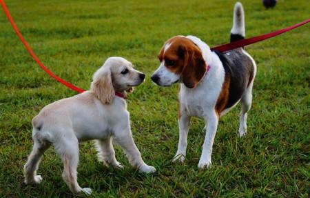 Nächster Termin zum Hundeführerschein